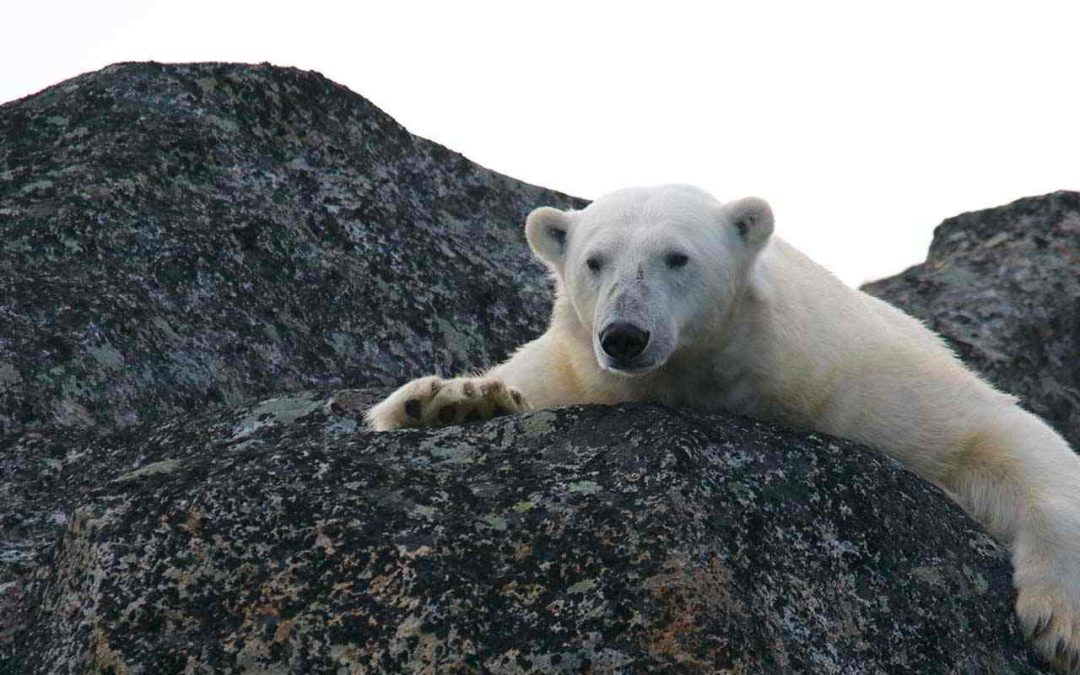 Cambio Climático – Alerta Global Conferencia Online